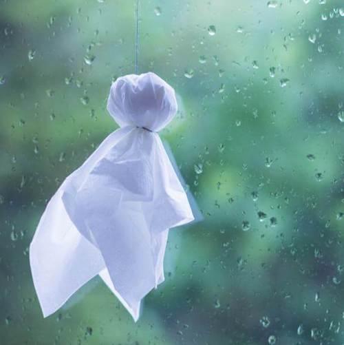 今年は長梅雨です><
