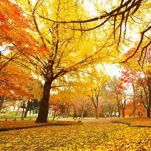 秋に向けて。